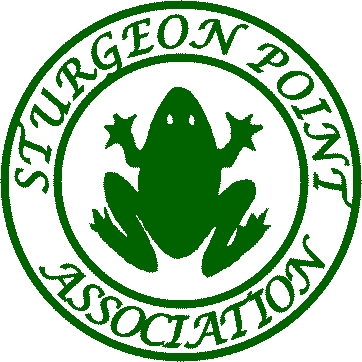 SPA Frog Graphic Green Only
